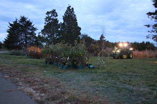 Hammo Fall Planting - Jim Murtagh - BC3G2500.jpg
