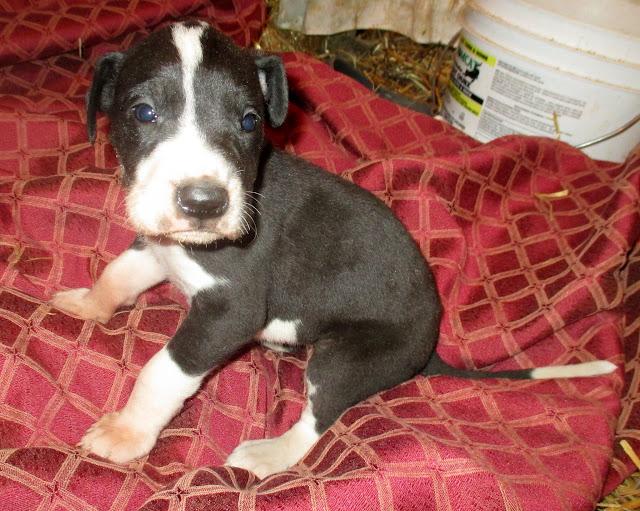 Violet @ 4 weeks