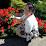 Marishka Doamna's profile photo
