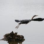 2009_05_03_Reifel_Bird_Sanctuary