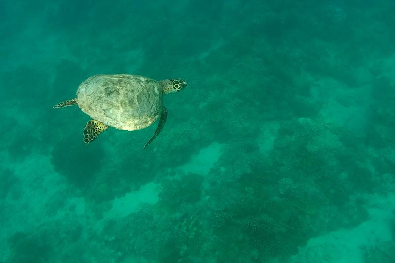 Tortuga marina en Gili Trawangan