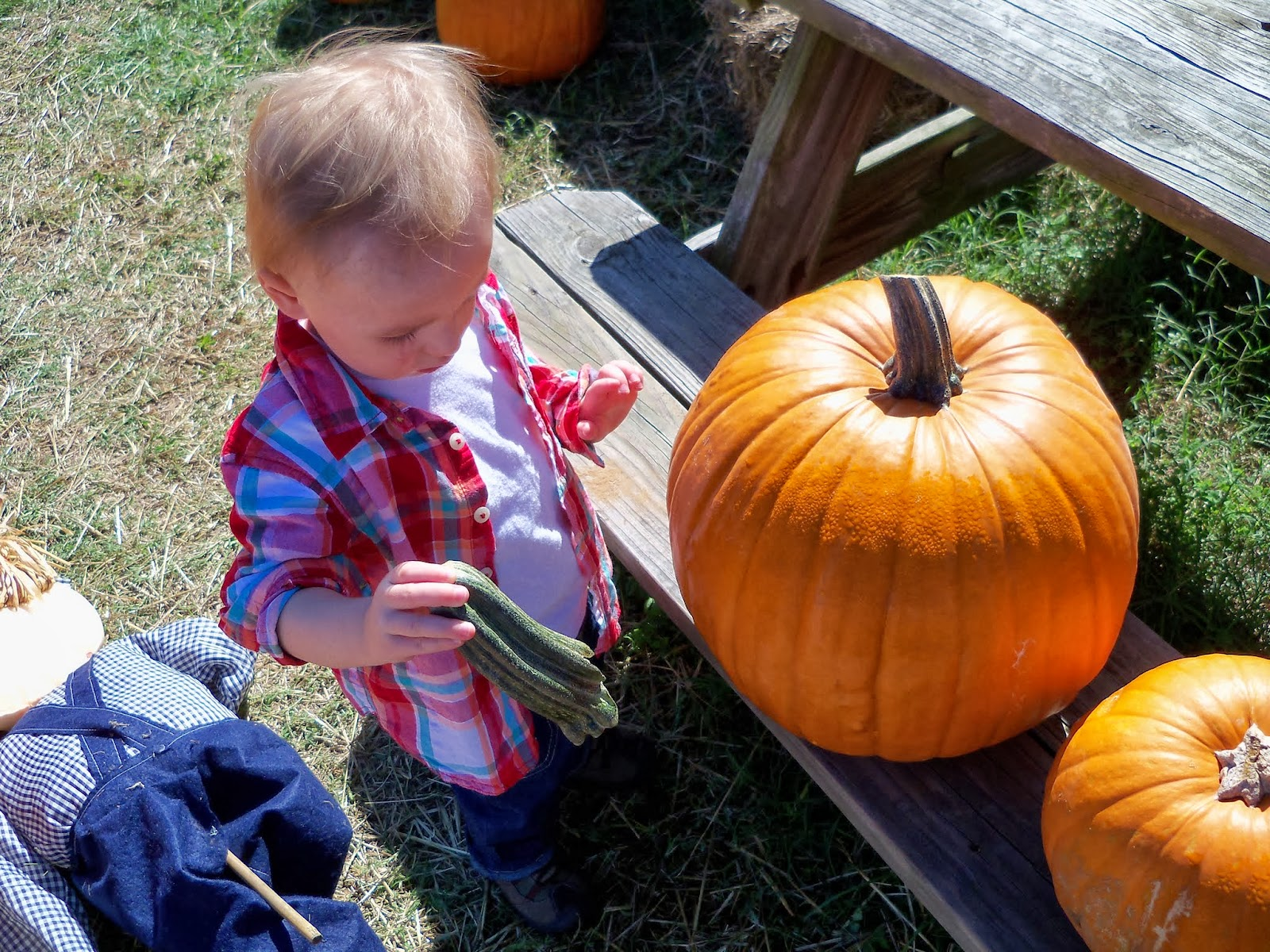 Pumpkin Patch - 115_8228.JPG