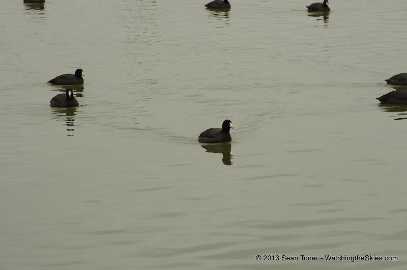 01-26-13 White Rock Lake - IMGP4364.JPG
