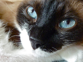 Photo: I just couldn't resist those blue eyes.....