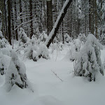 ГАБО_трасса 8 декабря 2012