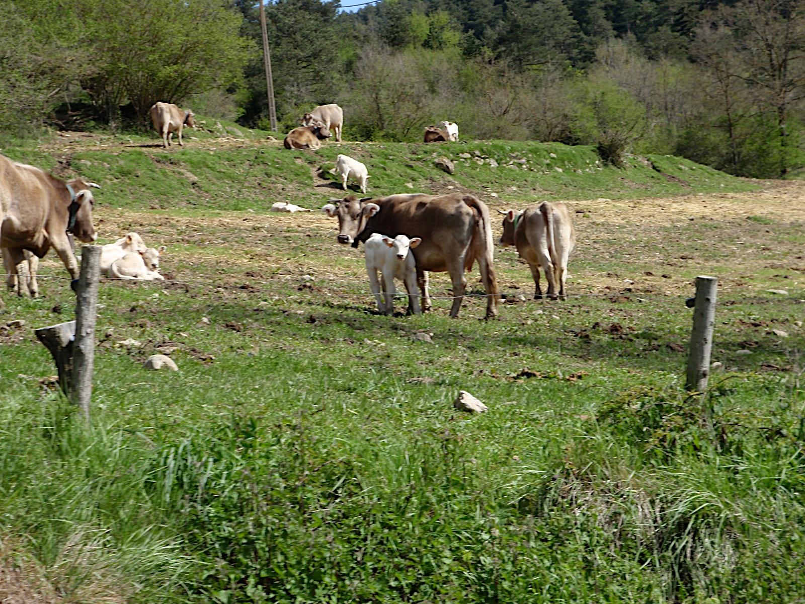 Sortida conjunta amb Azimut a Les Lloses Pioners 2010 - P5160148.JPG