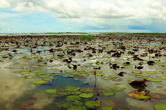 อุทยานนกน้ำทะเลน้อย จังหวัดพัทลุง