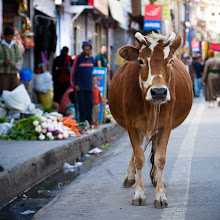 Photo: Main Bazaar, Leh, Ladkah, Indian Himalayas