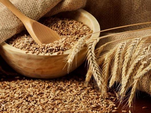 Пшеница-зерно-фото
