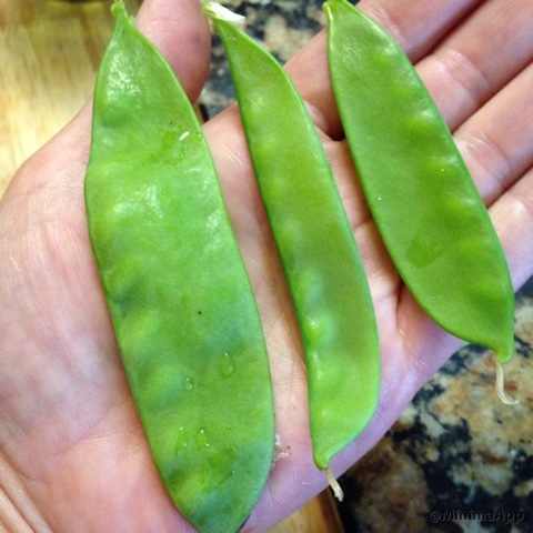 I compared 4 snow peas varieties and this was the best snow pea of the bunch!