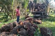 Setara Institute Ungkap Adanya Kriminalisasi 2 Petani oleh Pihak PTPN V Kampar Riau