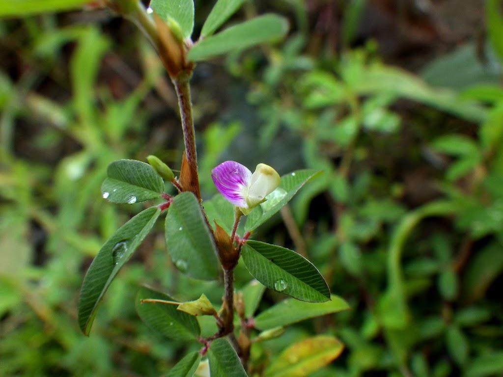 花の写真3