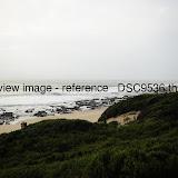 _DSC9536.thumb.jpg