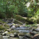 Rio Los Cedros, 1400 m. Montagnes de Toisan, Cordillère de La Plata (Imbabura, Équateur), 20 novembre 2013. Photo : J.-M. Gayman