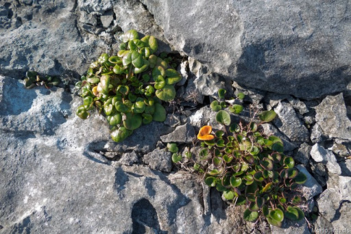 Burren and the Cliffs of Moher (1 of 1)-41
