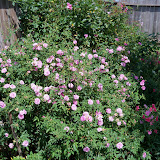 Gardening 2012 - 115_1734.JPG