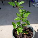Gardening 2010 - 101_1738.JPG