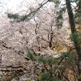 2014 Japan - Dag 10 - tom-SAM_0553-0001.JPG