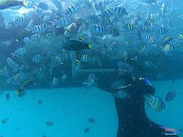 pulau harapan, 6-7 juni 2015 samsung gopro be 14