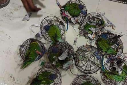 मुंबई में छापेमारी के दौरान 94 जानवर, पक्षी बचाए गए