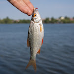 20150604_Fishing_Basiv_Kut_016.jpg