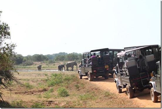 Шрі-Ланка, сафарі