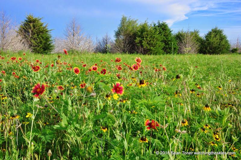05-26-14 Texas Wildflowers - IMGP1401.JPG