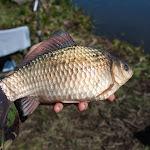 20150427_Fishing_Prylbychi_053.jpg