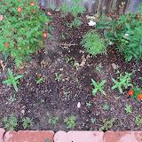 Gardening 2010 - 101_1168.JPG