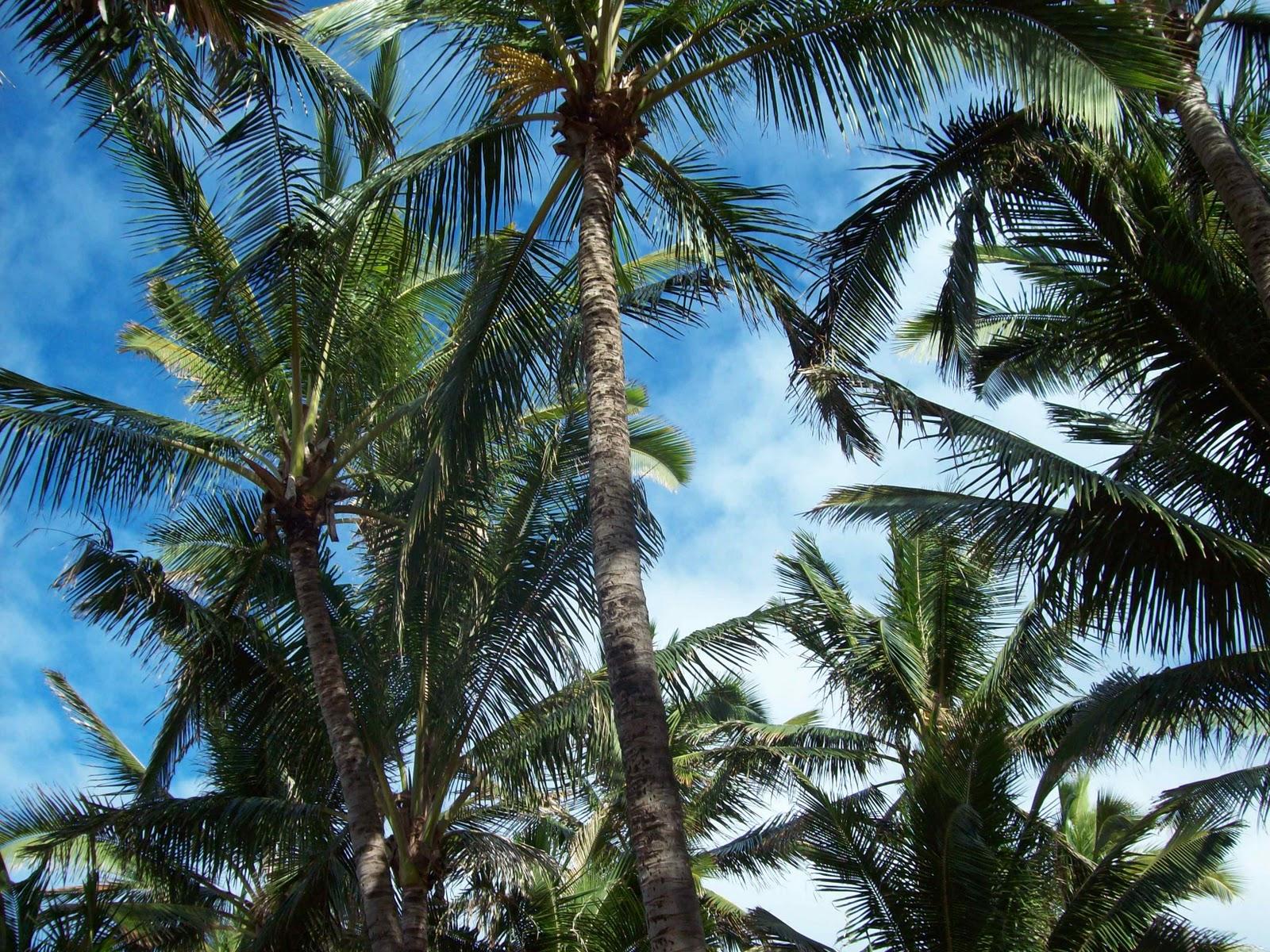 Hawaii Day 8 - 114_2217.JPG