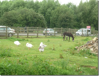 5 geese and donkeys still there