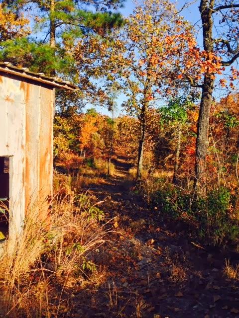 Anderson Creek Hunting Habitat - DeerHabitat004.JPG
