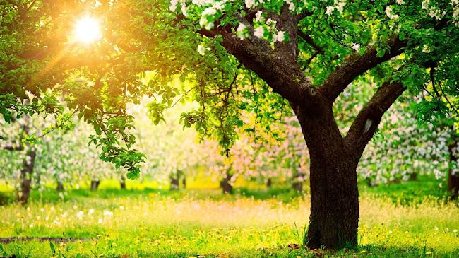 Ước mơ của 3 thân cây