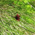 Cima Rovaia - Parco Nazionale dello Stelvio