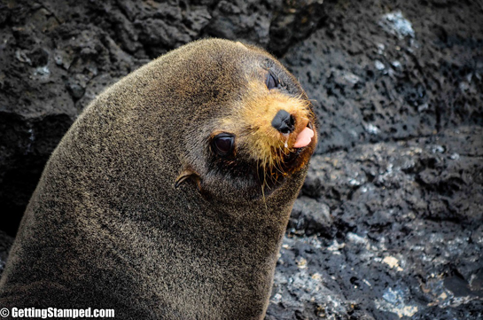 Galapagos-Islands-Animals-Say-the-Darnedest-Things-25