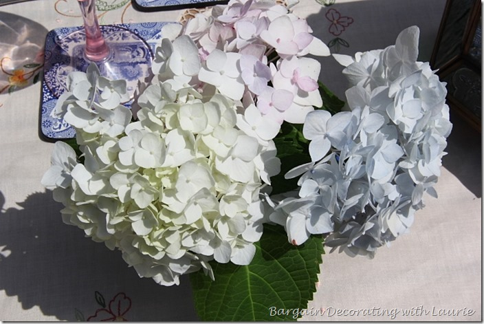 Blue, Pink, and White Hydrangeas