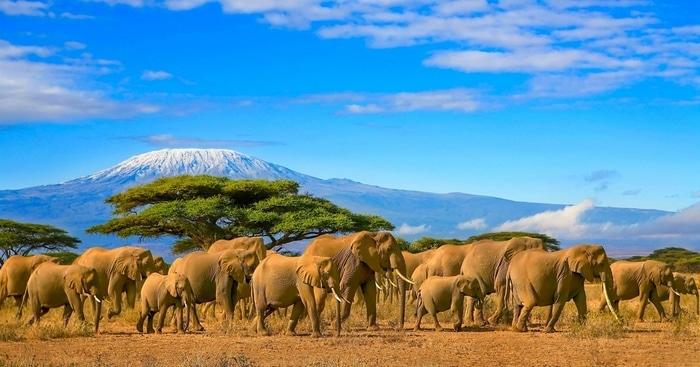 Safari en Monte Kilimanjaro Tanzania