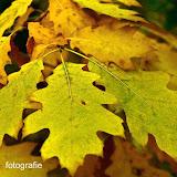 Herfst 2013 - Herfst_2013_026.jpg