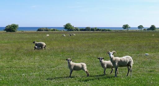 2015-06-13 034(Gotland)c.jpg