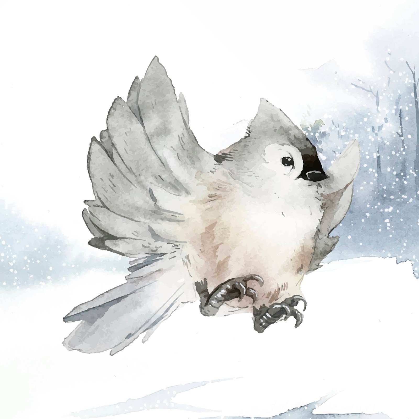 Tufted Titmouse Bird Wintertime Watercolor Vector Free Download Vector CDR, AI, EPS and PNG Formats