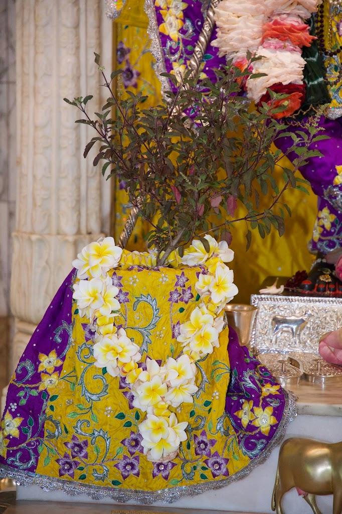 ISKCON New Govardhana Deity Darshan 22 Dec 2016 (17)