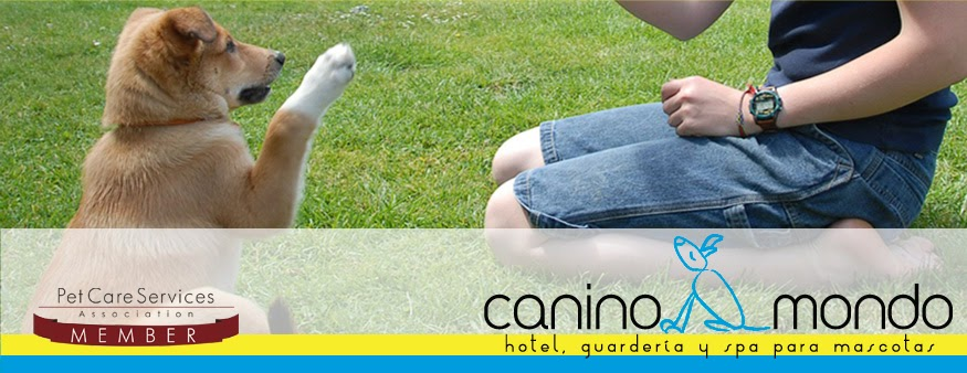 4 Patas - ¡Revista para los Amigos de Perros y Gatos!