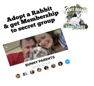 Adopt a Rabbit - Get Membership to Secret Support Group
