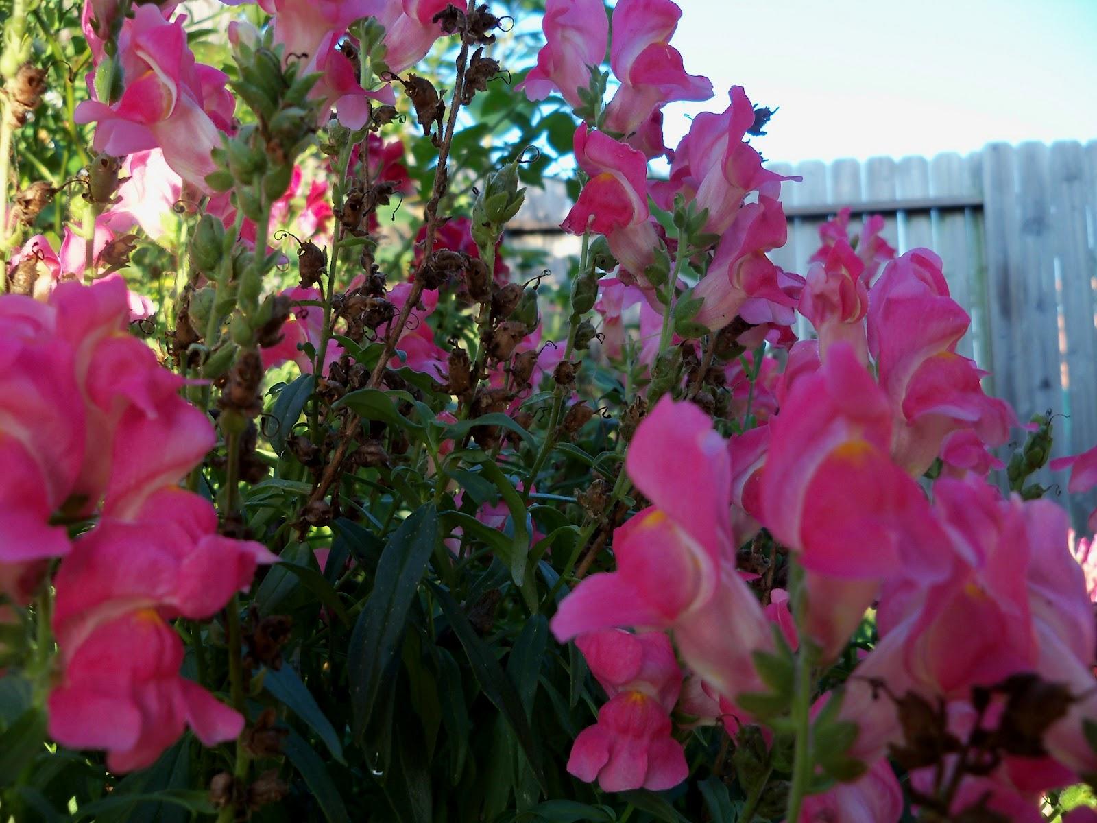 Gardening 2012 - 115_2664.JPG