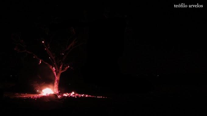 árvore e joana d'arc