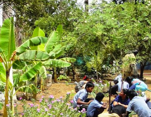 Sevai Promotes Simple School Gardening Hobby With Children With Special Needs