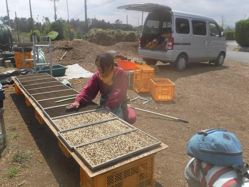 籾の上に土をかけます