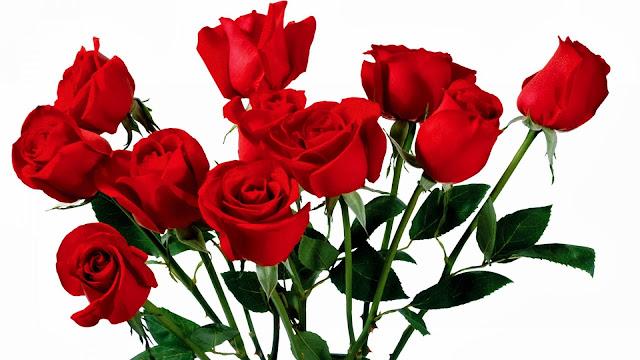 Fakta Unik dan Menarik ihwal Bunga Mawar Fakta-Fakta Unik dan Menarik ihwal Bunga Mawar