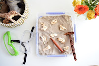 Safari Ltd Mammal Skulls Discovery Play