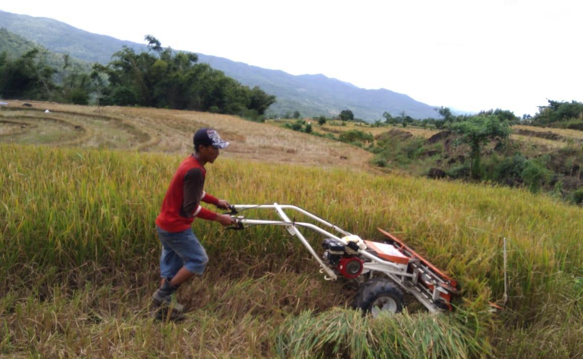 Panen Padi Dengan Power Reaper Sangat Membantu Petani Panen Dipersawahan Kontur Pegunungan
